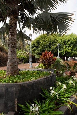 Ruta de Aqualia por el Puerto de la Cruz
