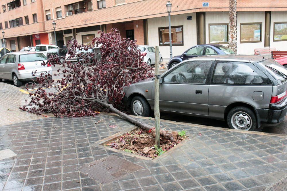 Árboles caídos en Monteolivete junto al Palau de les Arts.