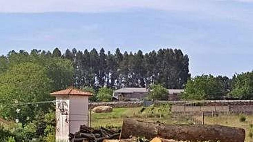 El PP denuncia una nueva tala de arbolado en Xaz