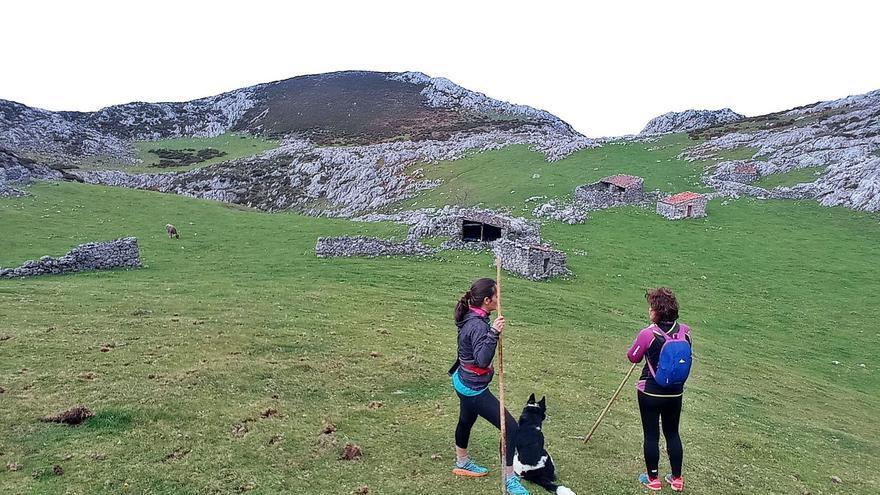 Las emblemáticas cabañas asturianas de Picos, en ruinas: se caen sin que nadie haga nada para evitarlo