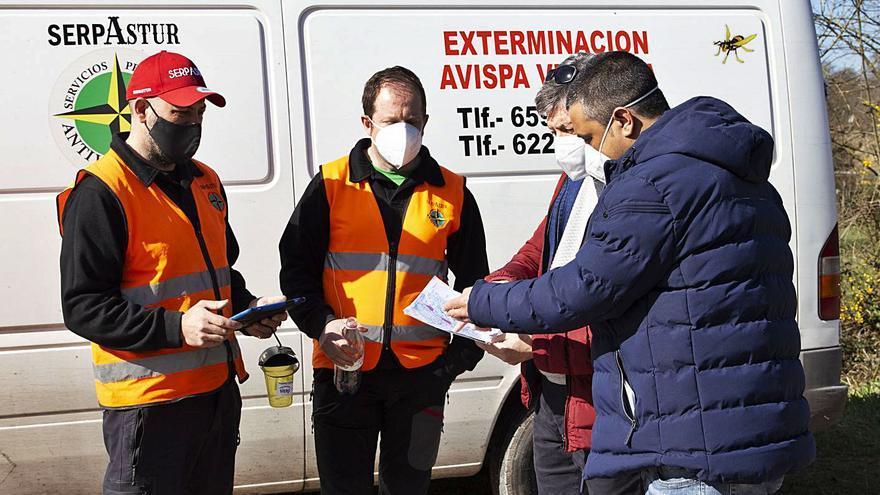Se inicia la campaña municipal contra la velutina en Siero