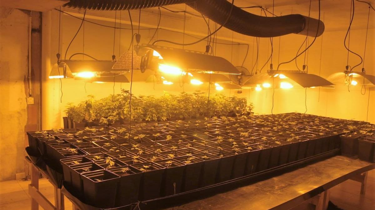 Desmantelada una banda de tráfico de drogas con plantación en Aranga