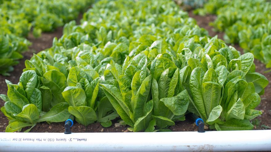 Regaber trabaja por una agricultura más sostenible, saludable y rentable