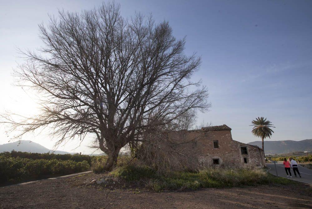 Árboles a proteger en la Vall de Segò.
