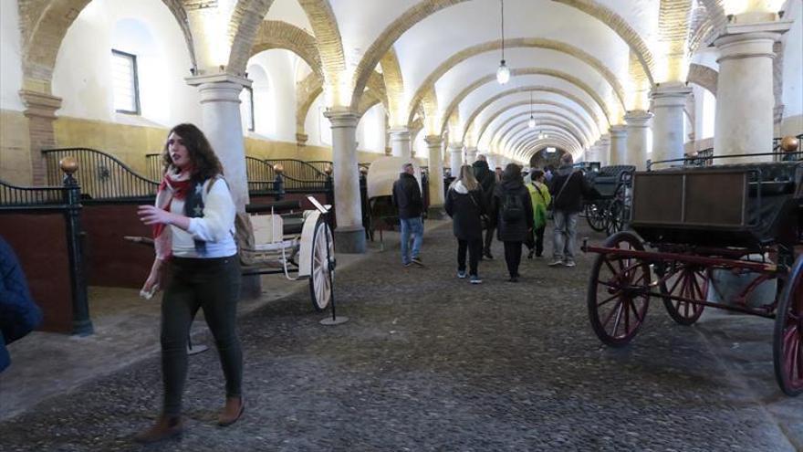 El Ayuntamiento estudia si Córdoba Ecuestre cobra por acceder a Caballerizas Reales
