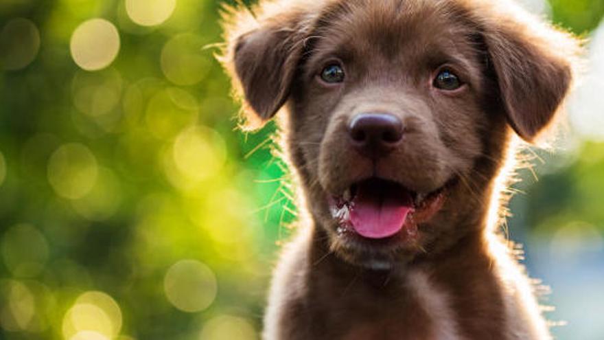 La nova llei de protecció animal, en 10 claus