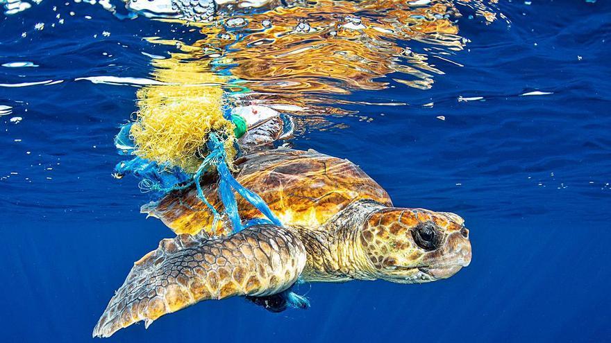 Mil fotos y muchas miradas ibicencas para conservar el mar Balear