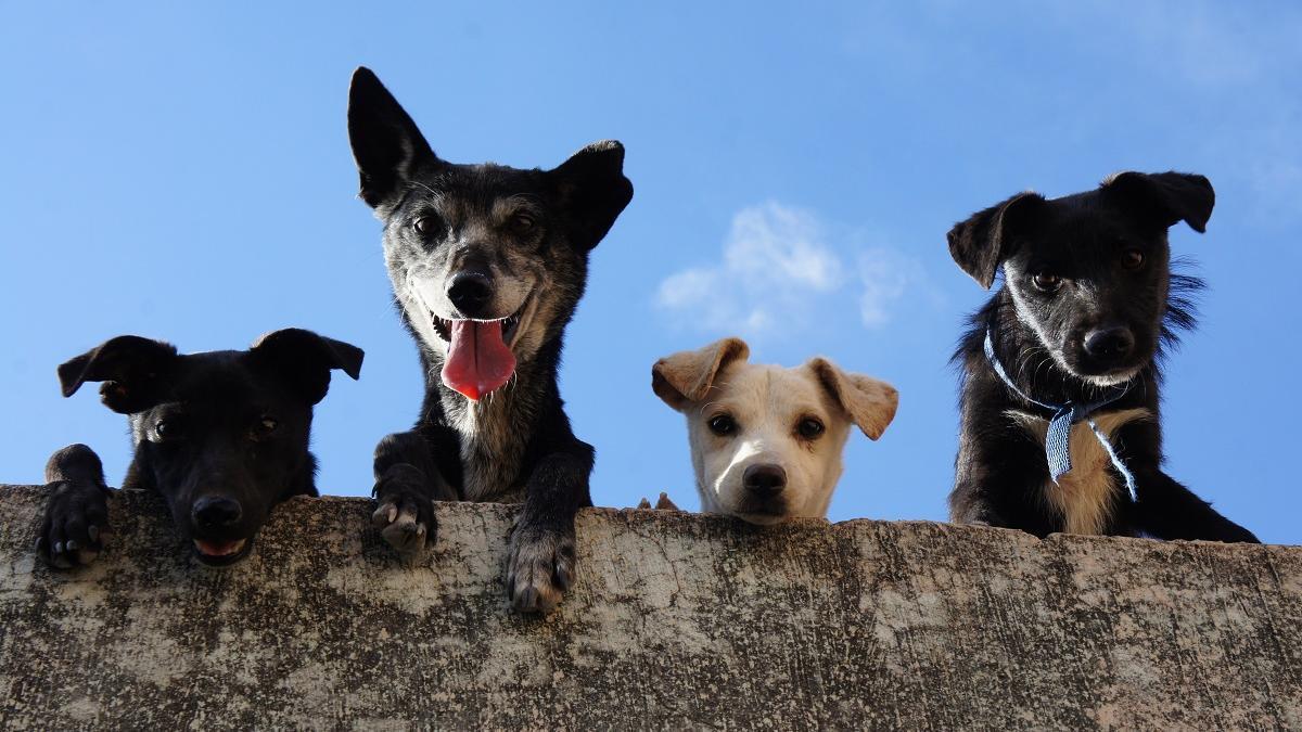 """Llíria pospone el """"concierto canino"""" donde se permitía acceder con mascotas"""