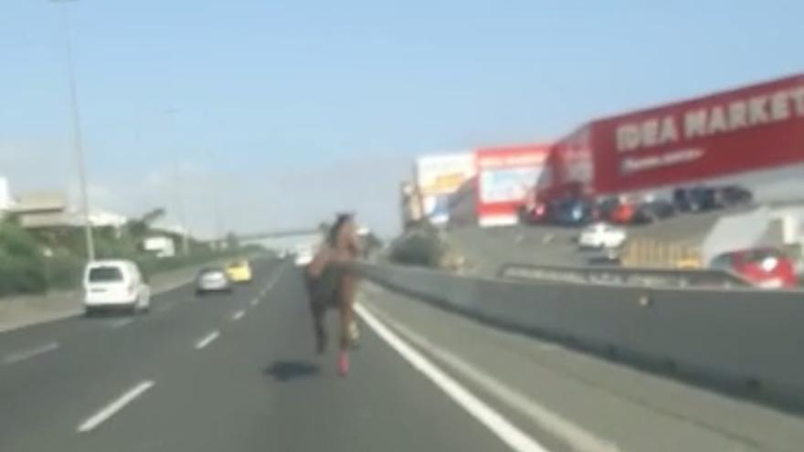 Un caballo se escapa y sorprende a los conductores de la GC-1