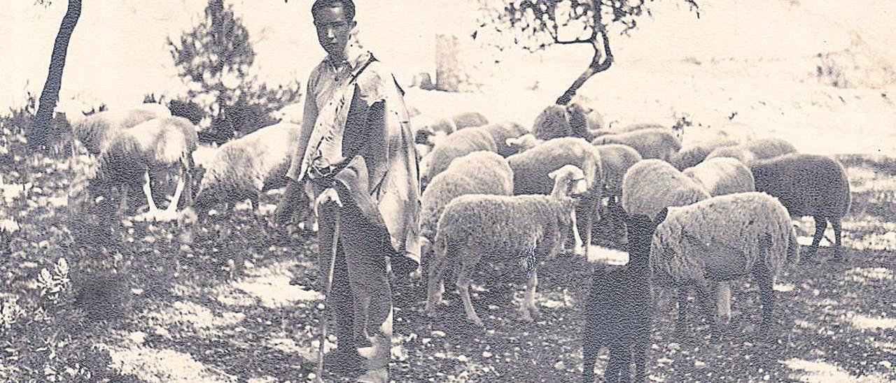 Un pastor con su ramado por el término municipal