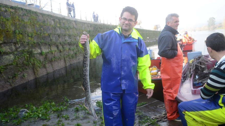 La pesca de lamprea implica a 21 tripulantes de Carril y 10 de Rianxo, a bordo de 14 lanchas