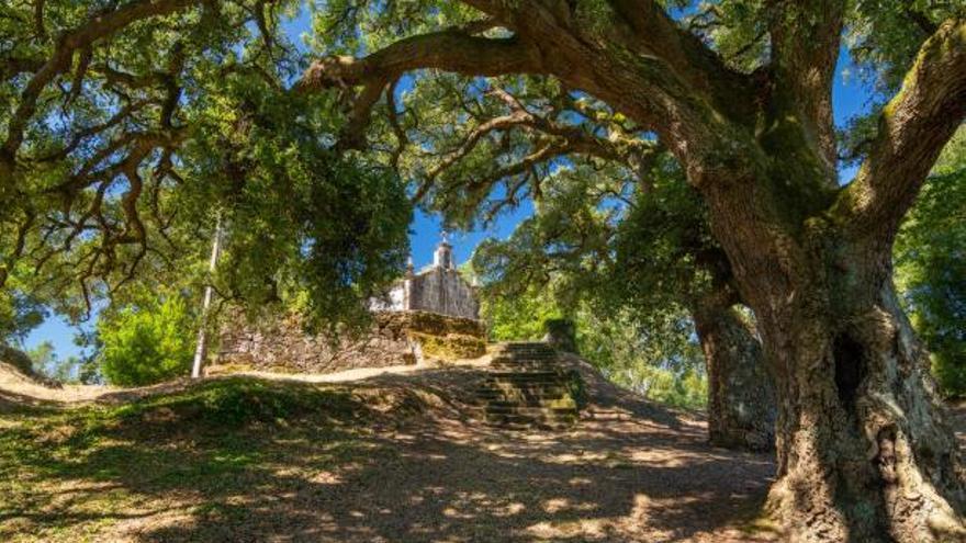 """Los alcornoques de la Magdalena, en O Rosal, ya son """"árboles singulares"""""""