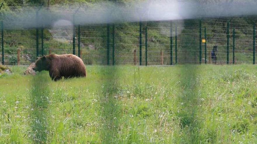 El cercado continuará funcionando como centro de recuperación de la fauna salvaje