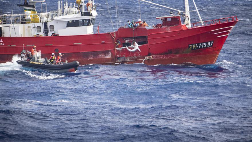 Greenpeace hostiga a un palangrero gallego en alta mar