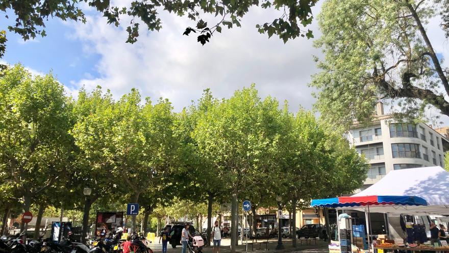 L'Ajuntament de Solsona aplicarà un tractament fitosanitari a l'arbrat de la plaça del Camp