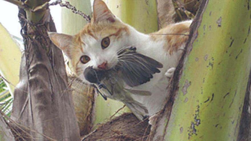 Gatos callejeros ponen en riesgo especies en peligro de extinción