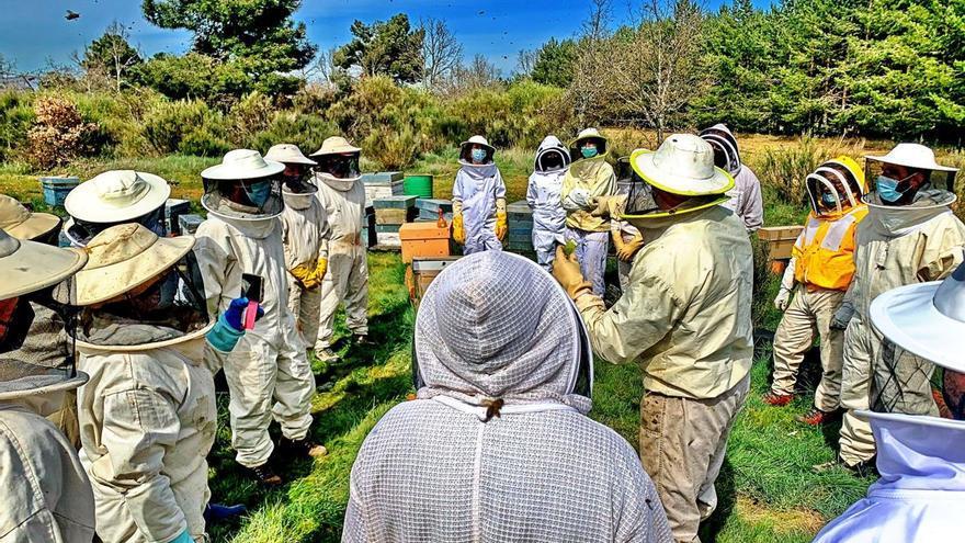 Cursos gratuitos para apicultores