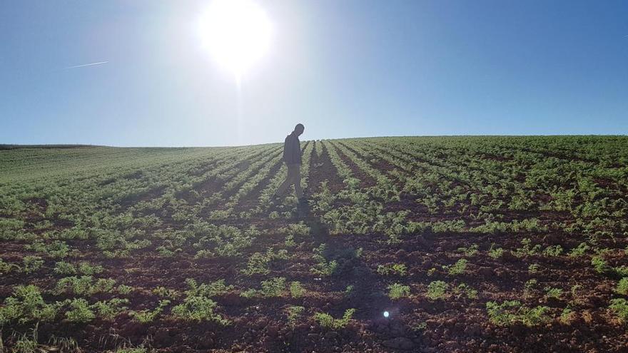 Desarticulada en Valladolid una red criminal que explotaba a extranjeros en labores agrícolas