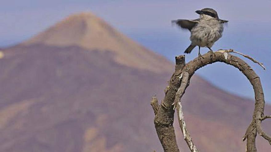 Las 'Aves de Canarias',  en pantalla de cine