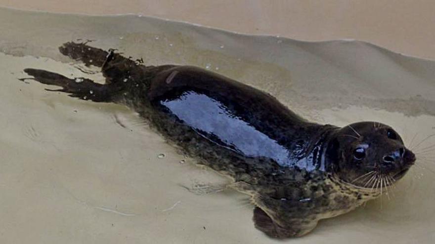 La Cemma confirma el adelanto de la temporada lobos marinos