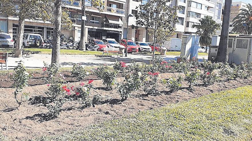 Una rosaleda para el Paseo de la Alameda