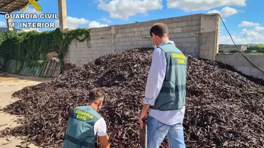 Investigadas 41 personas implicadas en el robo de 20 toneladas de algarroba en València