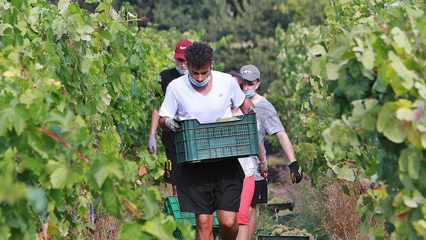 Los vinos gallegos atisban una recuperación de las ventas con la retirada de los aranceles de EE UU