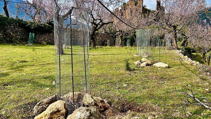 Connecta Natura treballa per conservar la biodiversitat del paisatge valencià