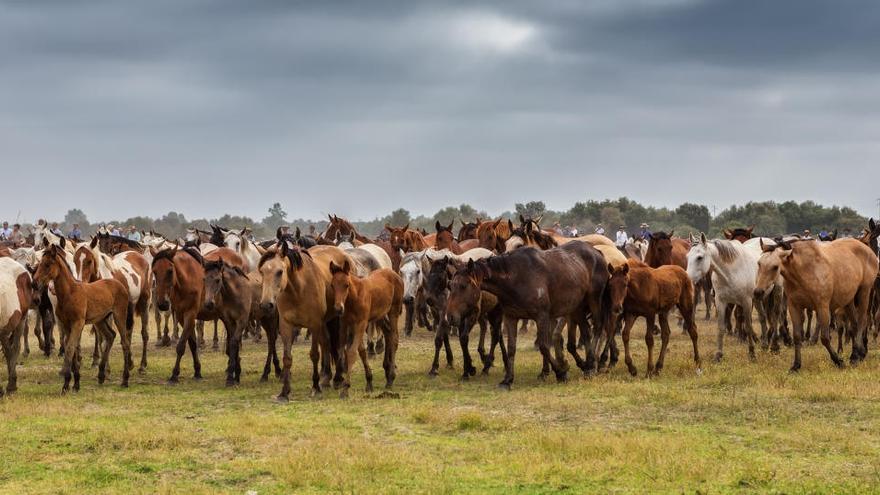 Suben a 70 los casos de fiebre del Nilo en caballos andaluces