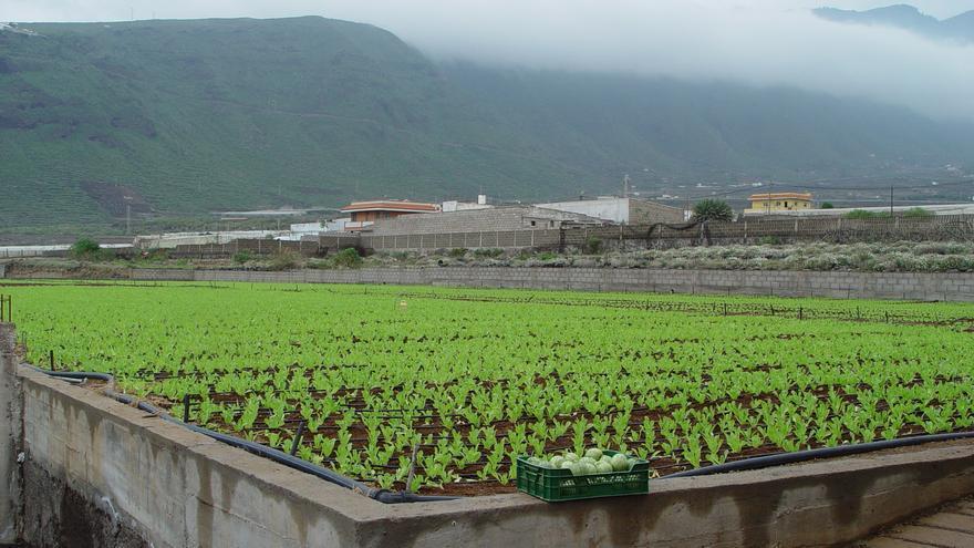 El Gobierno de Canarias destina ayudas por valor de 8 millones para abaratar el agua de uso agrícola