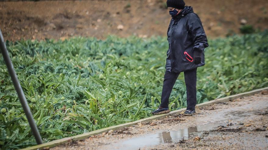 La lluvia «ahorra» un riego a la Vega Baja tras cincuenta días de sequía