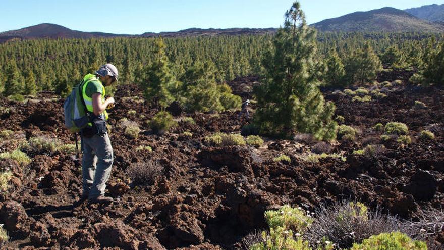 Una campaña arqueológica en el Teide profundiza en el pasado de la Isla