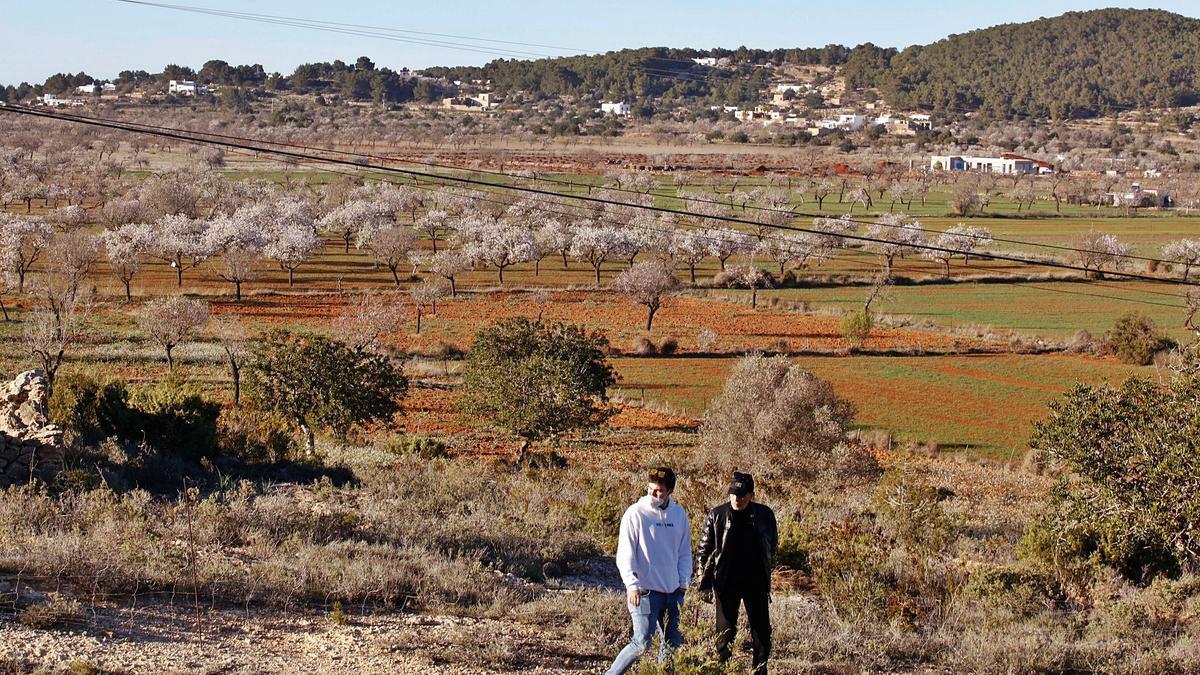 Dos personas pasean, ayer por la tarde, por el Pla de Corona, donde los  almendros están flor. | JUAN A. RIERA