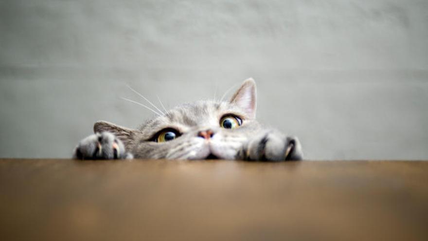 40 curiosidades de los gatos que, quizás, no sabías