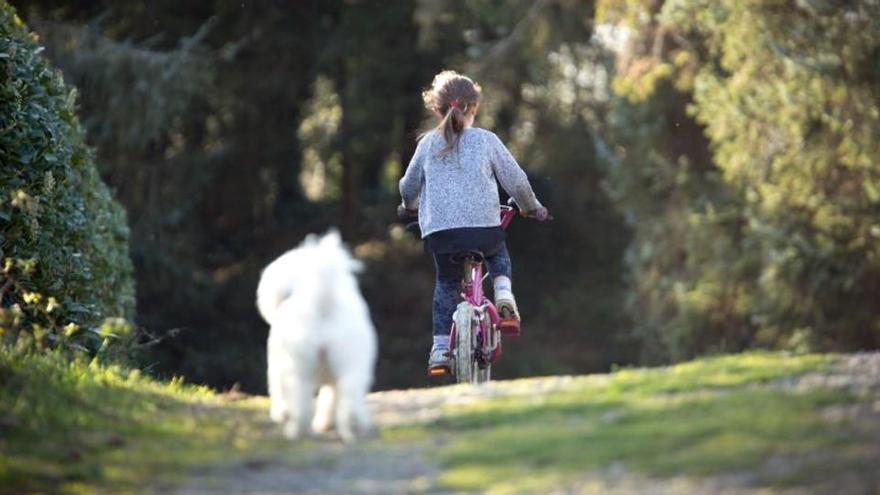 Tenir gos a casa incrementa el desenvolupament social i emocional dels infants