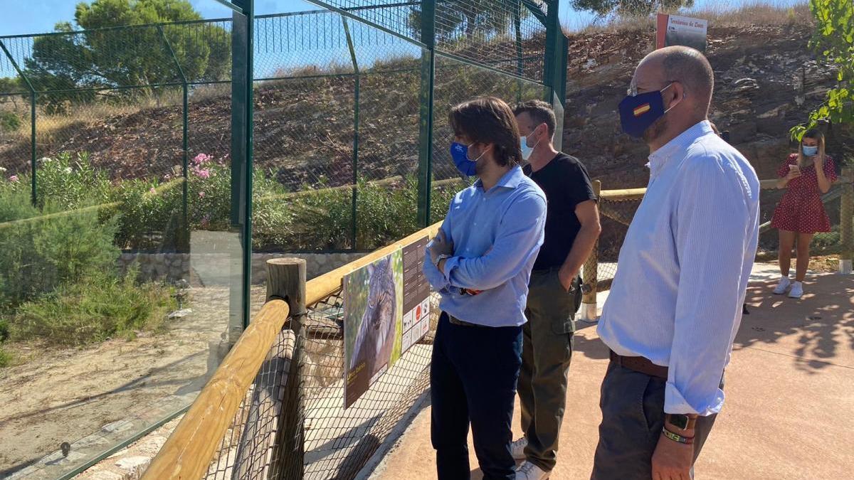 Murcia, cuarta ciudad del mundo con una familia de linces criada en cautividad