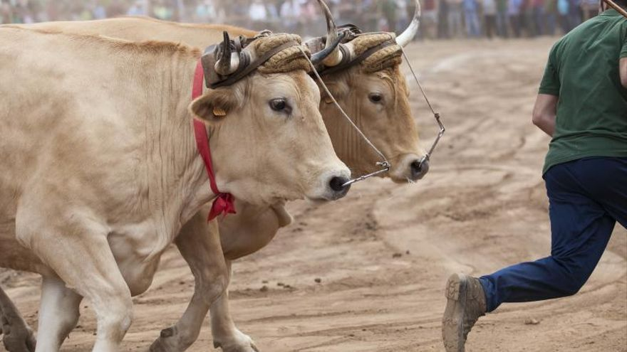 Canarias prevé 7,6 millones en ayudas extraordinarias para los ganaderos