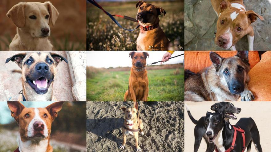 10 perros que puedes adoptar este verano en Castellón
