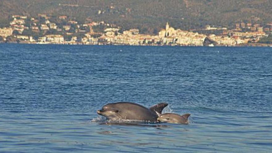 Dofins de Tramuntana busca autofinançar la campanya científica d'aquest estiu