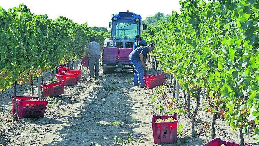 Malestar dels sindicats de pagesos amb els ajuts als viticultors gironins