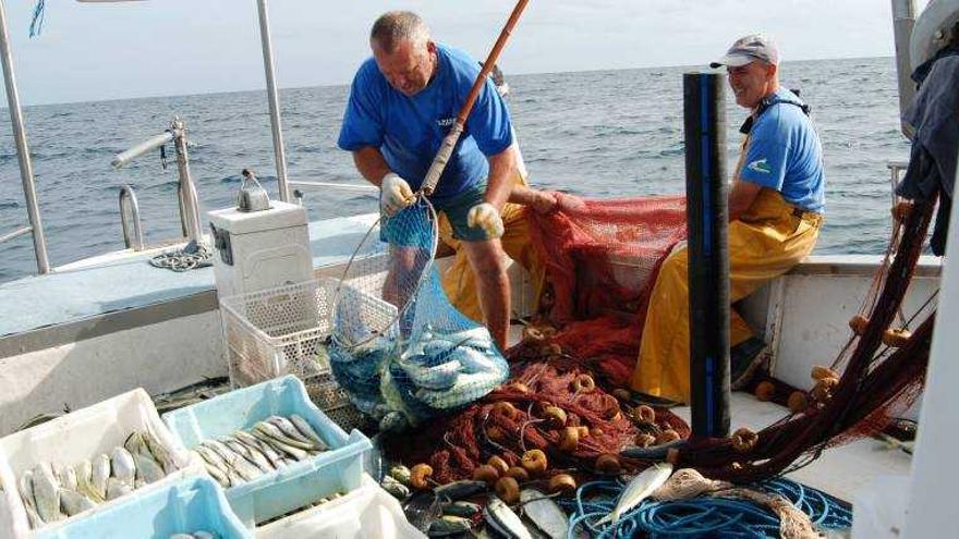 Desde hoy se levanta la veda para pescar llampuga hasta el 31 de diciembre