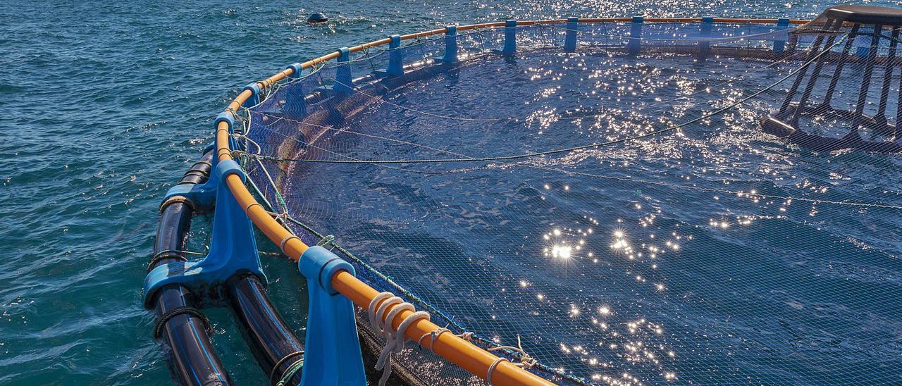 La multinacional greco-española Avramar ya cuenta con una granja marina en Calp.