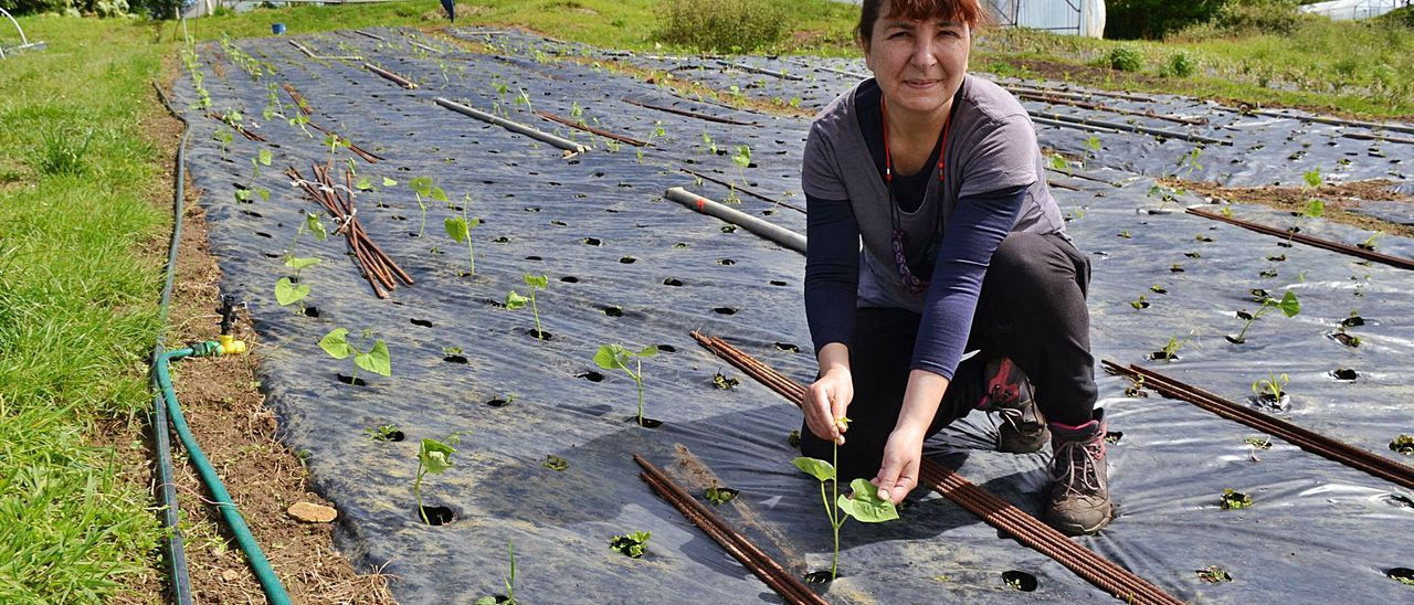 Dolores Arranz, mostrando el frijol verde que están replantando tras no quedar nada de los que tenían. | A.  Paredes