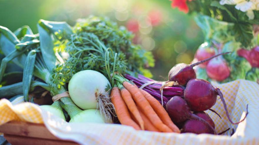 Aproximación a los macronutrientes y micronutrientes