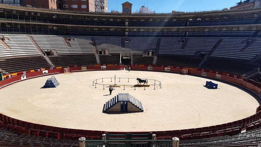 La temporada taurina arranca sin València