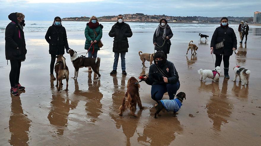 Foro propone regular una zona de pesca en la playa de San Lorenzo para evitar daños a mascotas