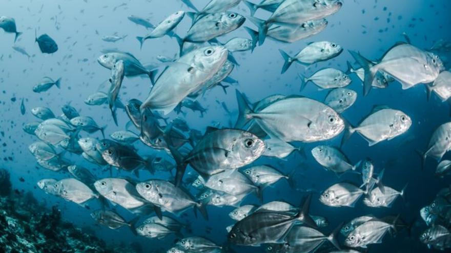 Los antidepresivos están exterminando a los peces
