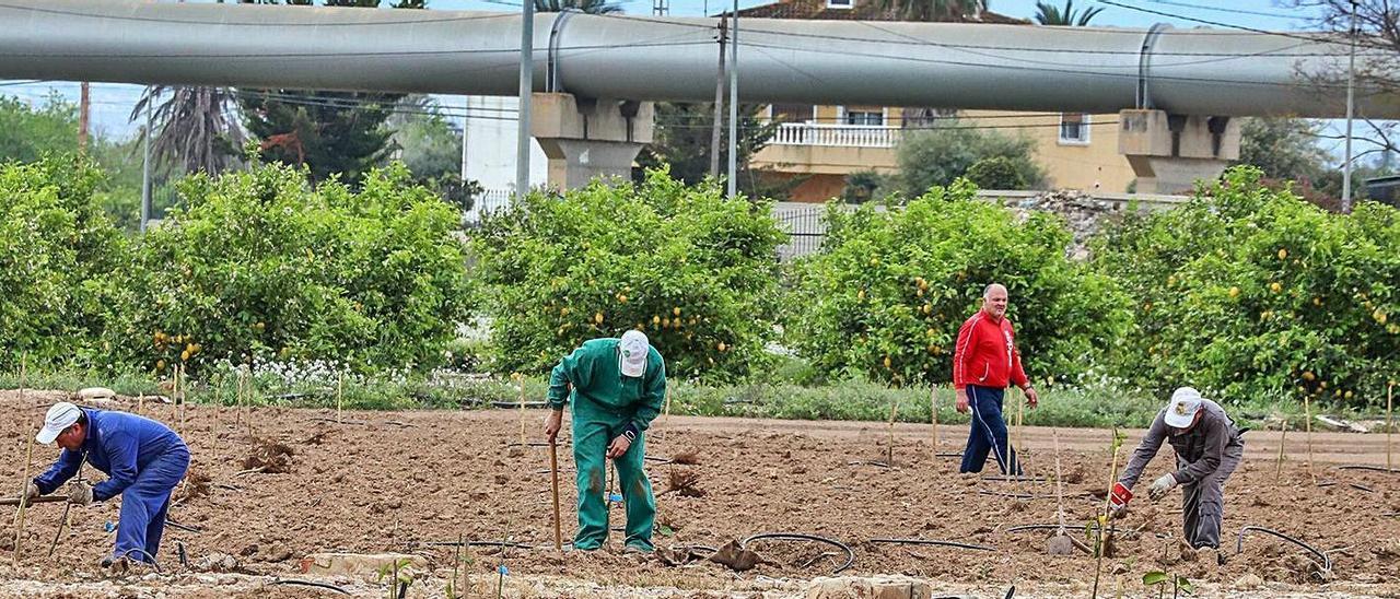 Agricultores trabajando, con una de las tuberías del trasvase Tajo-Segura al fondo. |