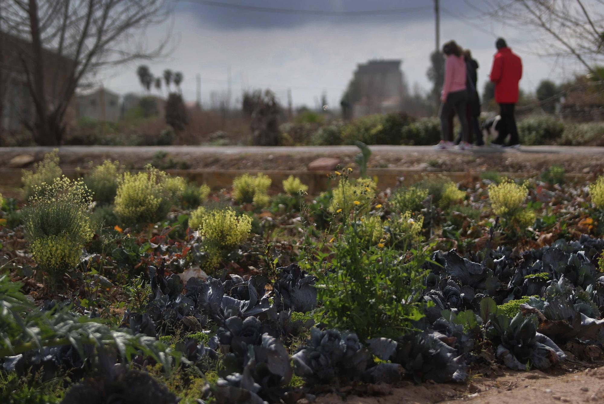 Los valencianos redescubren la huerta en los paseos de confinamiento