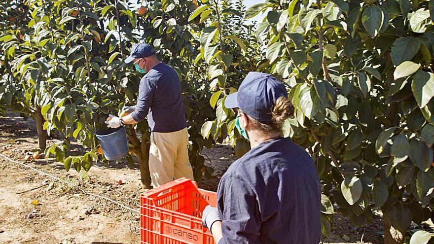 CC OO alerta del incumplimiento de la normativa anti-covid en el campo